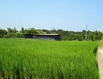 稻作生長期