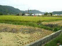 稻作間作期