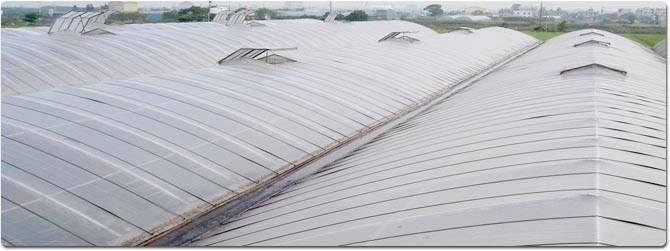 防颱溫室屋頂增設天窗系統