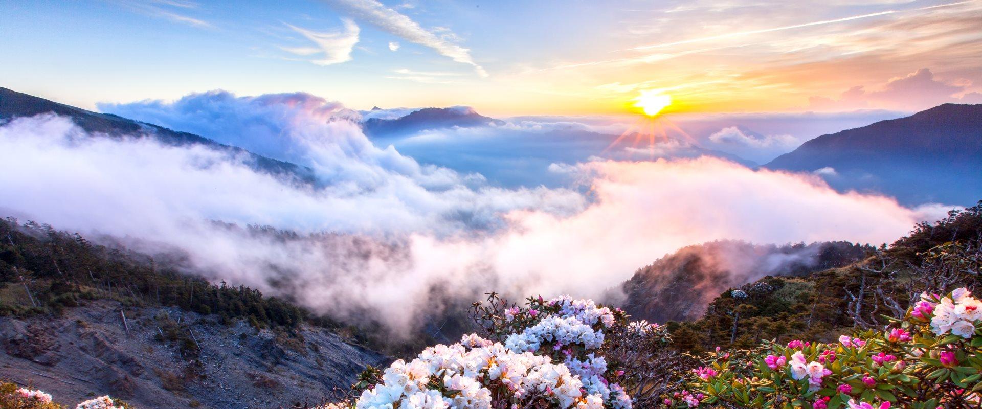 玉山杜鵑盛開在太魯閣國家公園的小徑上