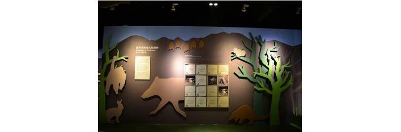 透過互動式翻牌圖版來介紹森林中的哺乳動物