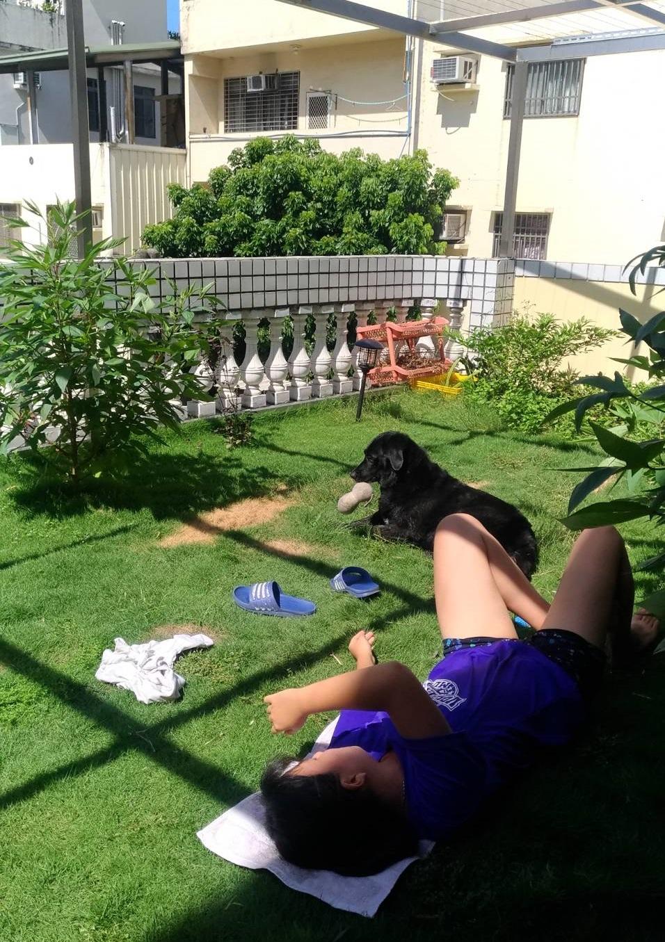 退役搜救犬奇蹟午後的日光浴