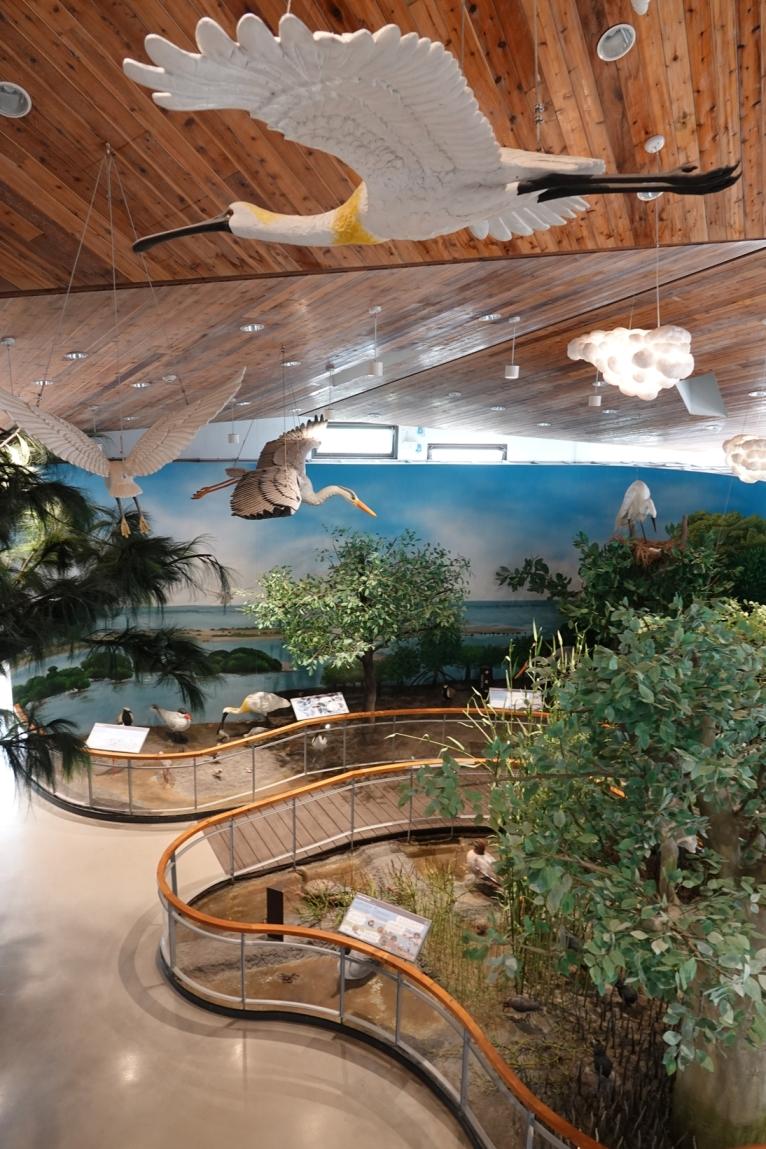 台江遊客中心放大版濕地生態展示