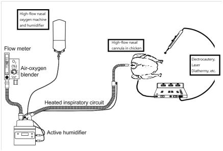 將雞肉體腔作為呼吸道,將鼻導管放入體腔開口,模擬鼻孔旁邊易散(圖1)