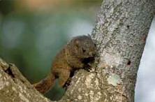 公園内の広葉樹林ではリスがよく姿を見せます。中でもタイワンリスは最も数が多いといわれています。