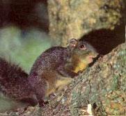 リスは日中最もよく姿を見せる小型の哺乳類です。