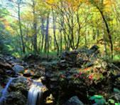 タロコ国立公園は年間を通して豊富な雨量に恵まれ、地下水がところどころ岩の隙間から流れ出ています。