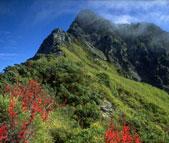 高山エリアの山の斜面は年間を通して強い風が吹くため背の高い植物が育ちにくく、春から夏にかけては高山植物が花を競います。