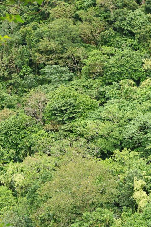 得卡倫步道-次森林植被(.jpg)