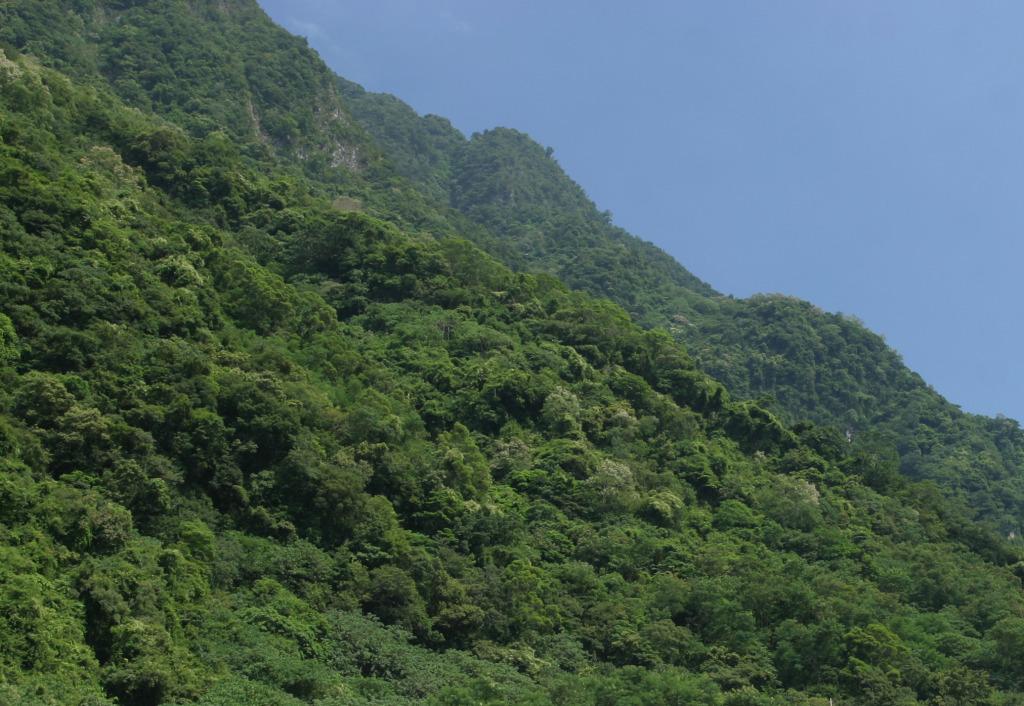 Secondary forest(.jpg)