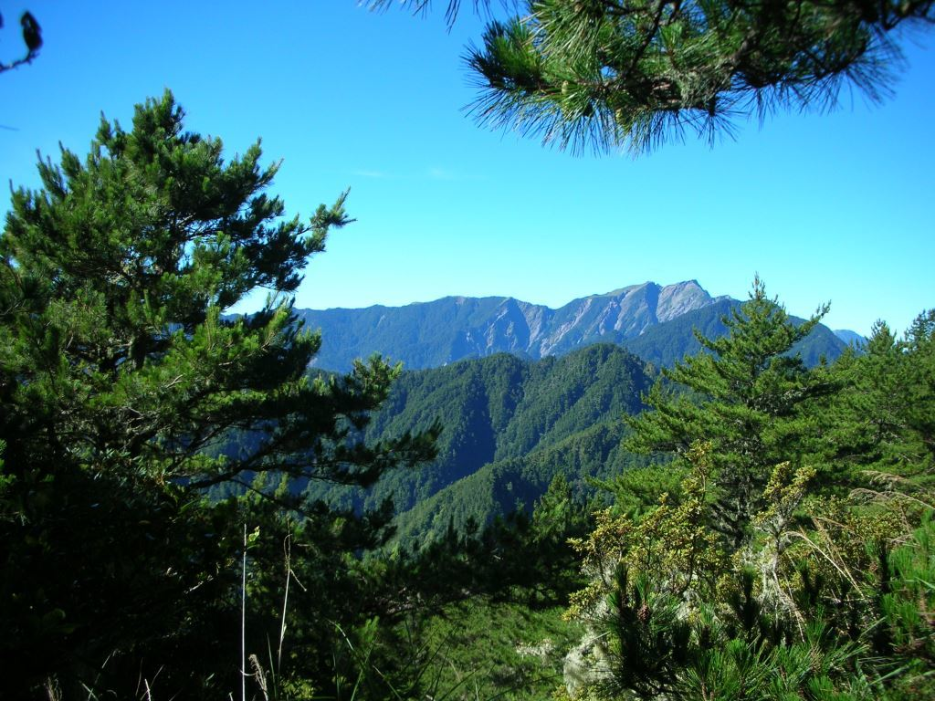 Evergreen deciduous broad-leaved forest