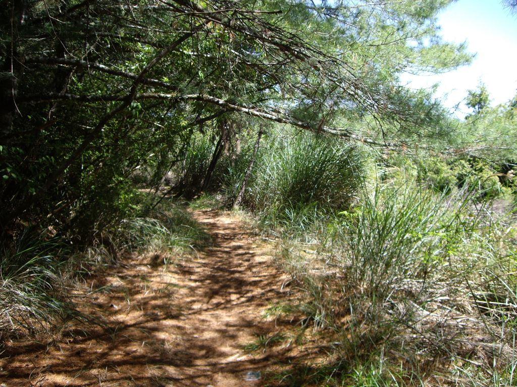 Mt. Bilu Trail 820 Forest Road