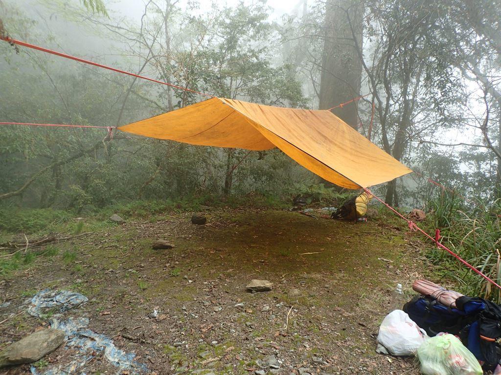 Canopy for Mt. Qingshui Trail