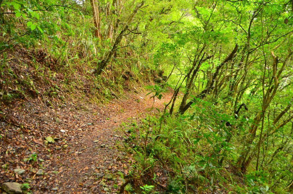 Lushui Wenshan Trail(.jpg)