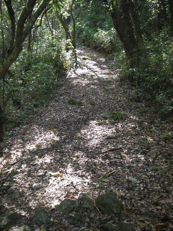 A view of Lushui-Wenshan Trail(.jpg)