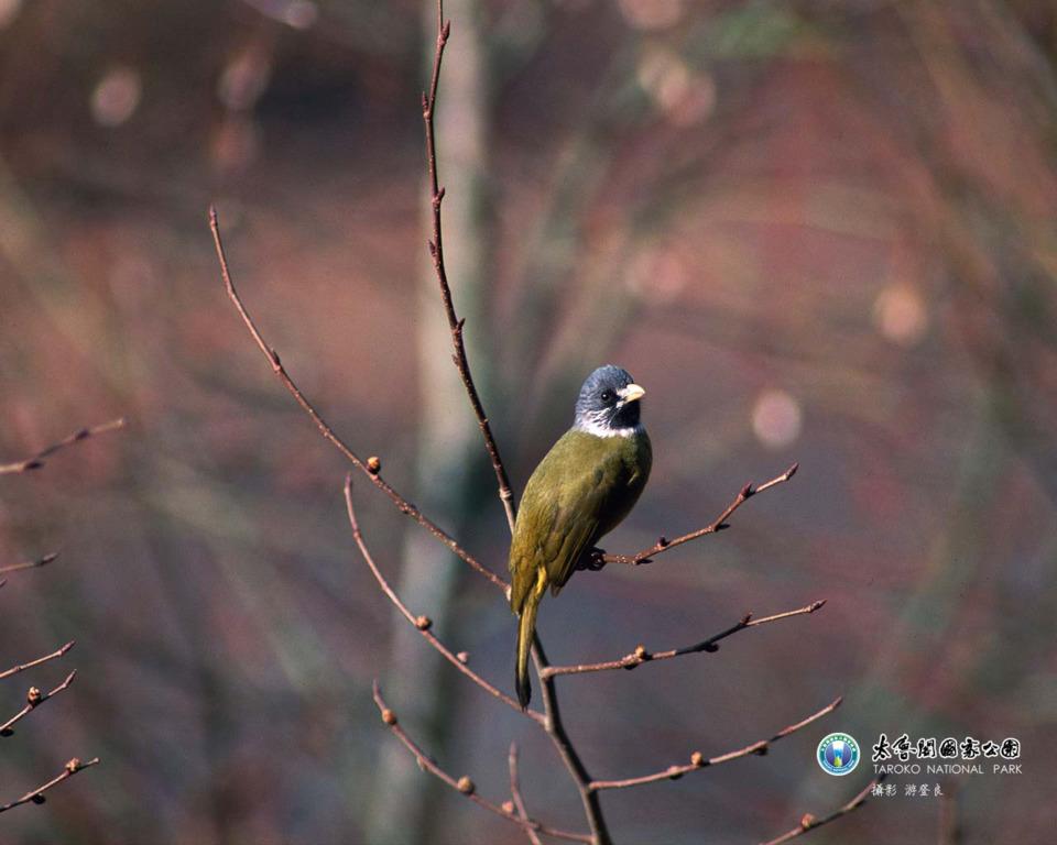 鳥(.jpg)